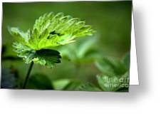 Just Green Greeting Card by Jeremy Hayden