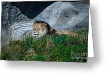 Just Lion Around Greeting Card