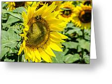 Just Me And The Bumblebee Greeting Card