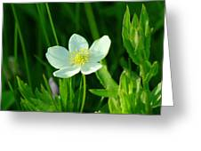 Just One Pretty Flower Greeting Card