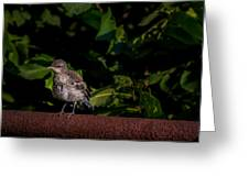 Just Out Of The Nest Greeting Card