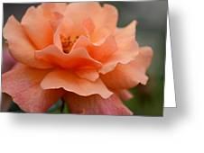 Just Peachy Greeting Card