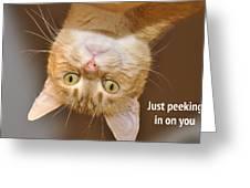 Just Peeking In Greeting Card