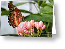 Just Pink Butterfly Greeting Card