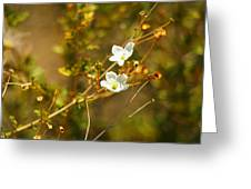 Just Two Little White Flowers Greeting Card