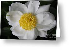 Just White Greeting Card