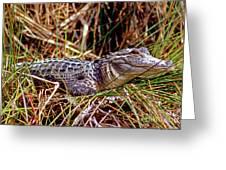 Juvenile American Alligator Greeting Card