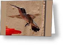 Juvenile Broadtale Anna Hummingbird Landing On The Perch Greeting Card