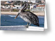 Juvenile Brown Pelican Greeting Card