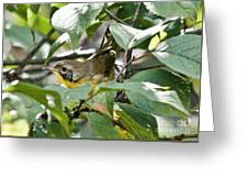 Juvenile Common Yellowthroat Greeting Card