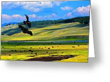 Juvenile Eagles Play Fight Greeting Card