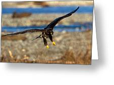 Juvenile Landing Greeting Card