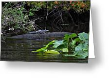 Juvie Gator Greeting Card