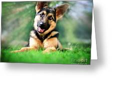 K9 Cute Greeting Card