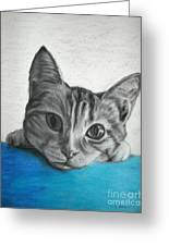 Kahlua Kitty Greeting Card