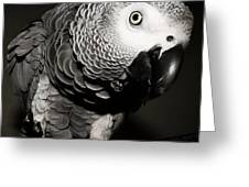 Kaja B W  Greeting Card