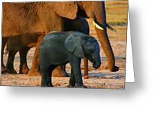 Kalahari Elephants Greeting Card