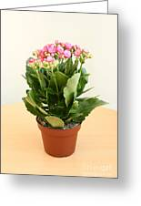 Kalanchoe. Greeting Card