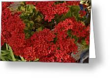 Kalanchoe Flowers Greeting Card
