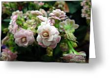 Kalanchoe Flowers Greeting Card