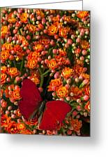 Kalanchoe Plant With Butterfly Greeting Card by Garry Gay