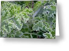 Kale Interior Greeting Card