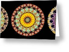 Kaleidoscope Ernst Haeckl Inspired Sea Life Series Triptych Greeting Card by Amy Cicconi