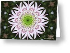 Kaleidoscope Pink Daisy Greeting Card