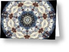 Kaleidoscope Seashells Greeting Card by Cathy Lindsey