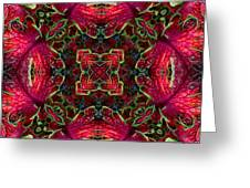 Kaleidscope Made From Image Of Coleus Plant Greeting Card
