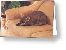Kangaroo Buddy Sculpture Greeting Card