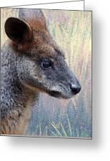 Kangaroo Potrait Greeting Card