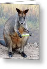 kangaroo Snack Greeting Card