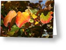 Kansas Fall Leaves Close Up Greeting Card