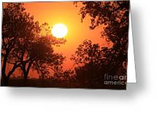 Kansas Golden Sunset With Trees Greeting Card