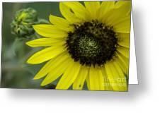 Kansas State Flower Greeting Card