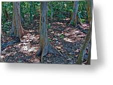Kapok Trees Along The Trail In Manual Antonio National Preserve-costa Rica Greeting Card
