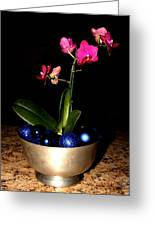 Kathy's Orchid Greeting Card