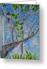 Kathy's Wall And Vine Greeting Card