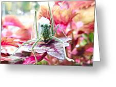 Katydid Face Greeting Card