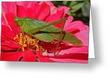 Katydid Greeting Card