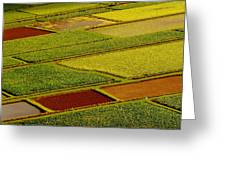 Kauai Taro Fields Greeting Card