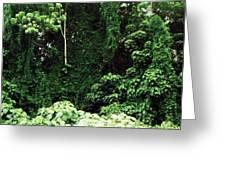 Kauai Trees Greeting Card