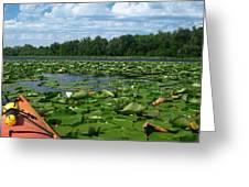 Kayaking Among The Waterlillies Greeting Card