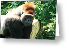 Kc Gorilla-3 Greeting Card