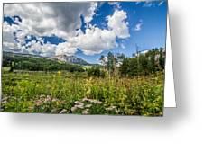 Kebler Pass Meadow Greeting Card