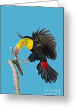 Keel-billed Toucan About To Land Greeting Card
