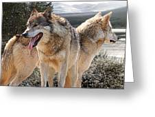 Keeping Watch - Pair Of Wolves Greeting Card