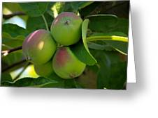Kelowna Apples I Greeting Card