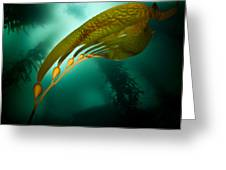 Kelp Forest Greeting Card
